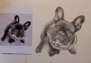 french-bulldog-2