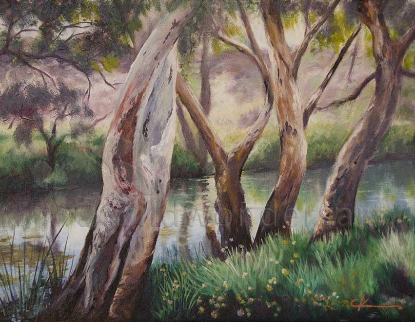 river red gum trees, millstream wa