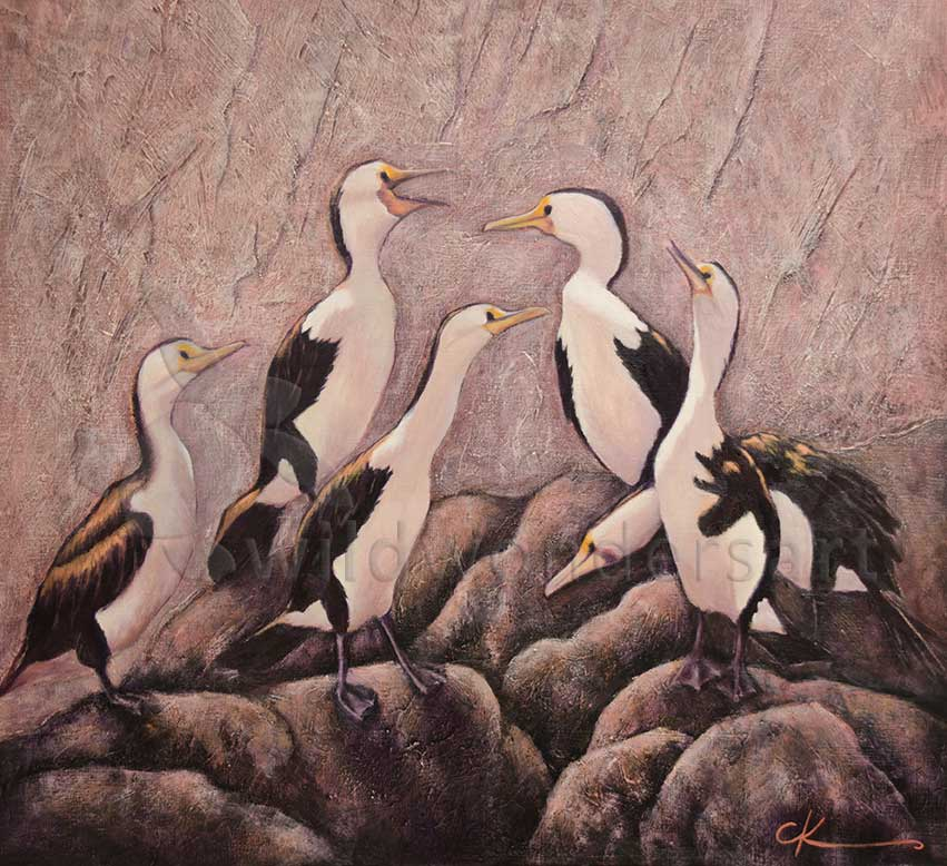 pied-cormorants - squabbles