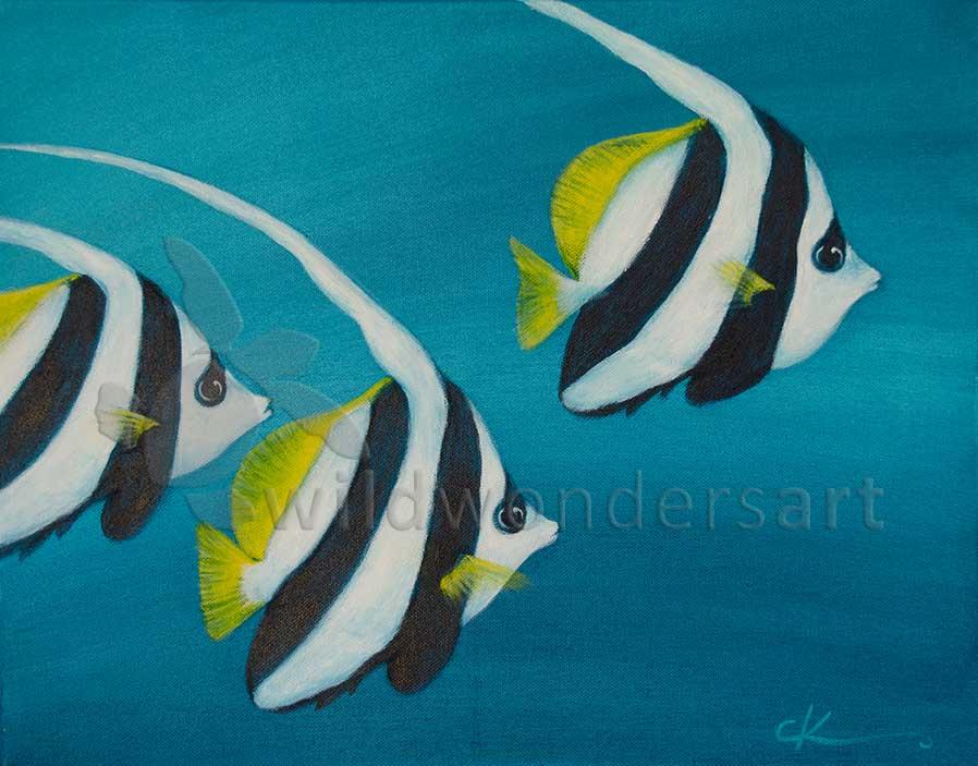 Bannerfish - trifecta