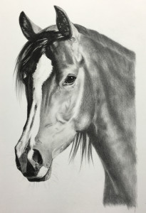 arabian stallion pencil