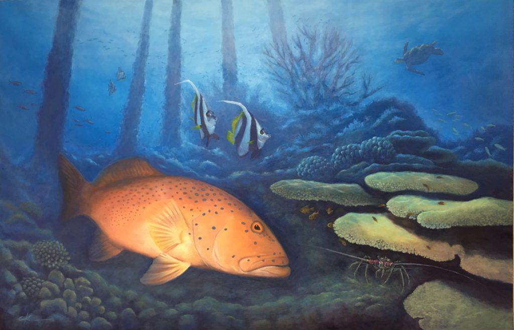 coral trout, reefs cape